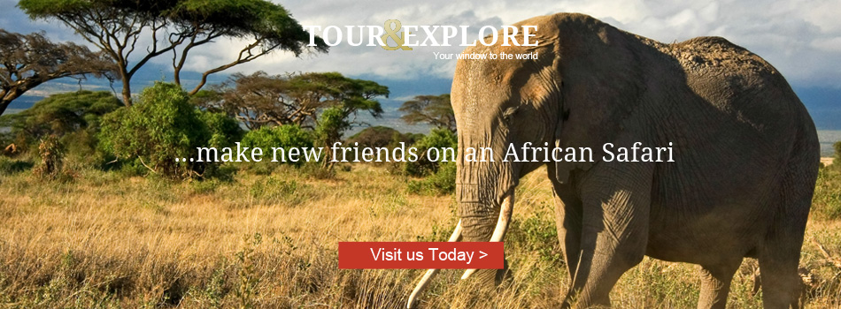 Make new friends on an African Safari