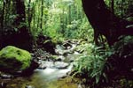 Panama rain forest