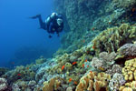 Scuba diver in the Red Sea