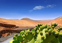 Discount Lanzarote Holidays