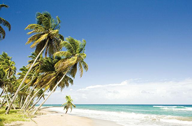 Caribbean New Year