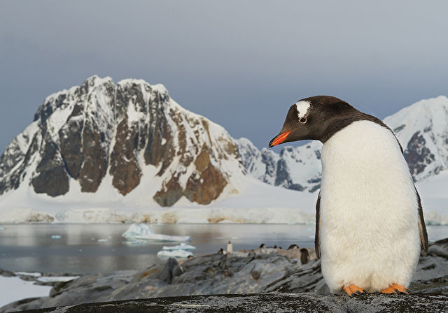 Antarctica Pursuit Voyage